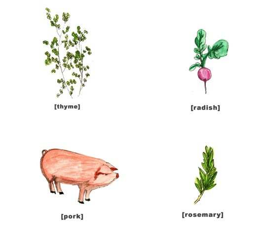 Illustration animals & vegetables