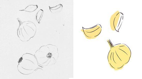 Tea Towel Design - Garlic Illustration